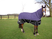 Buy Horse Rugs in UK